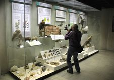 An elderly man takes pictures of exhibits in the State Darwin Museum. A series of photos dedicated to the visit of the State Darwin Museum. Includes photographs royalty free stock photo