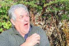Elderly man tired and yawning. Royalty Free Stock Photo