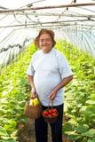 elderly man vegetable garden Stock Photo