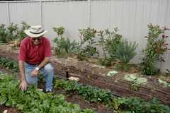 Elderly Man in Vegetable Patch Royalty Free Stock Photos
