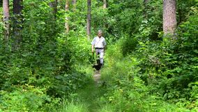 Elderly man walking woods with dogs. Man in shirt and jeans walking along the woods with dogs stock video footage