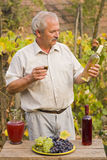 Elderly Man With Wine. An elderly man tasting his wine, against grapevines grape, a bottle of red wine and a jug of must on a wooden table Stock Photo
