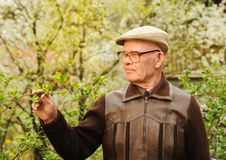 Elderly man working in garden Royalty Free Stock Photo