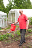 An elderly man works in a garden Royalty Free Stock Image
