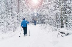 Elderly men skiing in beautiful winter forest. Two elderly men skiing in beautiful  snow covered winter forest on sunny day with sun shining through tree Stock Photography