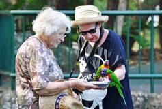 Elderly mother senior daughter feeding Rainbow Lorikeet birds Gold Coast