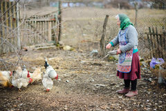 The elderly peasant woman feeds hens on the courtyard. stock photos
