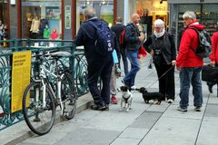 Elderly people are walking in the center of city with their dogs. stock photos