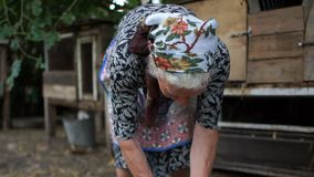 An elderly rural woman holds a rabbit in her hands. The animal is very scared and is trying to break free. Rabbit farm. Veterinary care, medical examination stock video footage