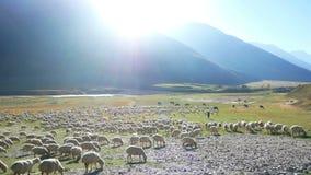 Shepherd sheep hill mountains stock footage
