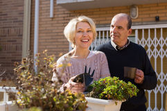 Elderly spouses in patio. Happy smiling mature women with horticultural sundry and aged men drinking tea in patio. Focus on woman stock photography