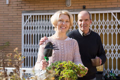 Elderly spouses in patio. Elderly women with horticultural sundry and aged men drinking tea in patio Royalty Free Stock Photography