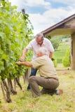 Elderly winemakers Stock Images