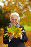 Elderly woman collecting maple Stock Photos