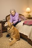 Elderly woman with dog. Elderly Caucasian woman and dog in bedroom at retirement community center Royalty Free Stock Photo