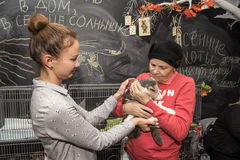 Elderly woman on the exhibition, the distribution of cats from a shelter Royalty Free Stock Photography