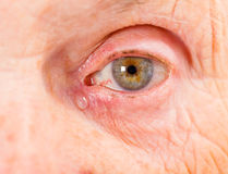 Elderly woman eye. Close up photo of elderly woman eye Royalty Free Stock Image