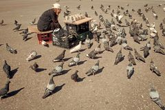Elderly woman feeding pigeons on the street. Concept of kindness Old lonely woman feeding birds in the center of the big Stock Photography