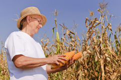 Elderly woman in field Royalty Free Stock Photography