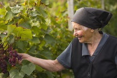 Elderly woman in garden Stock Image