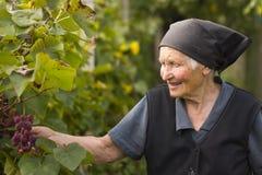 Elderly woman in garden. A hoar elderly woman in the garden next to grapevines stock images