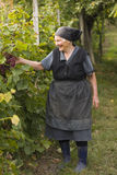Elderly woman in garden Royalty Free Stock Image