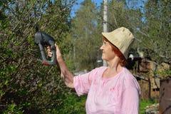 An elderly woman gardener electric trimmer cuts a Jasmine Bush i Stock Photos