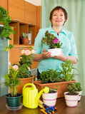 Elderly woman gardener smiling with plants Stock Image