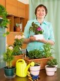 Elderly woman gardener smiling with plants Stock Image