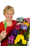 Elderly woman is gardening Stock Photos