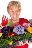 Elderly woman is gardening Stock Images