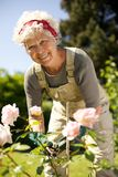 Elderly woman gardening in backyard. Portrait of lovely senior woman taking care of plants in her garden looking at you smiling - Elderly woman gardening in royalty free stock photos