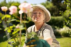 Elderly woman gardening in backyard. Elderly woman wearing sun hat looking at flowers in backyard garden - Outdoors stock images