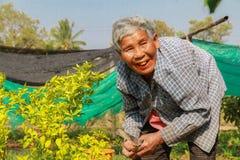 Elderly woman gathering vegetables in her vegetable garden. Stock Photos