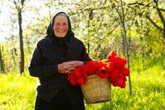 Elderly woman happy Stock Photos
