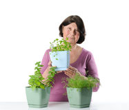 Elderly woman with herb seedlings in pots. Royalty Free Stock Photos