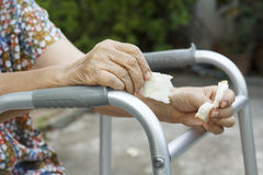 Elderly woman holding bread for dogs Stock Photo