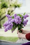 Elderly woman holding a bunch of violet coloured lilac twigs. In hands. Body parts, soft focus on lilac flowers royalty free stock photography