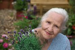 Elderly Woman Holding Lavender royalty free stock images