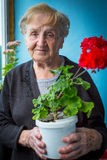 Elderly woman holding a pot of red flowers. Happy. Royalty Free Stock Photo
