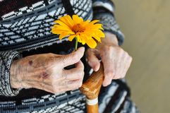 An elderly woman holding a yellow flower and a wooden cane on a summer day on the porch.  stock image