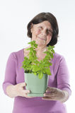 Elderly woman with holds out basil in a pot (focus on face). Royalty Free Stock Image