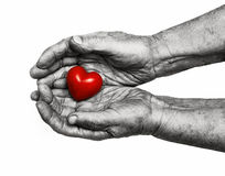 Elderly woman keeping red heart in her palms Stock Photos