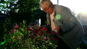 An elderly woman looks at and sniffs the flowers in the garden of a country house stock video