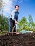 Elderly woman loose soil rake Stock Images