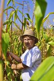 Elderly woman in maize field Stock Images