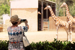 Elderly woman making picture of giraffes Royalty Free Stock Photos