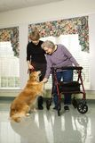 Elderly woman petting a dog. Elderly Caucasian woman using walker and middle-aged daugher petting dog in hallway of retirement community center Stock Image