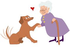 Elderly woman petting a dog. Cute elderly woman petting an happy dog Stock Images