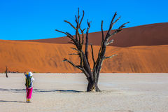 Elderly woman photographing picturesque dried tree Royalty Free Stock Image